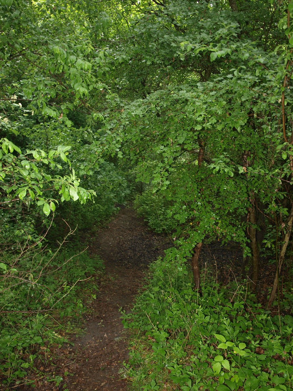 shelters ved natursti i skoven