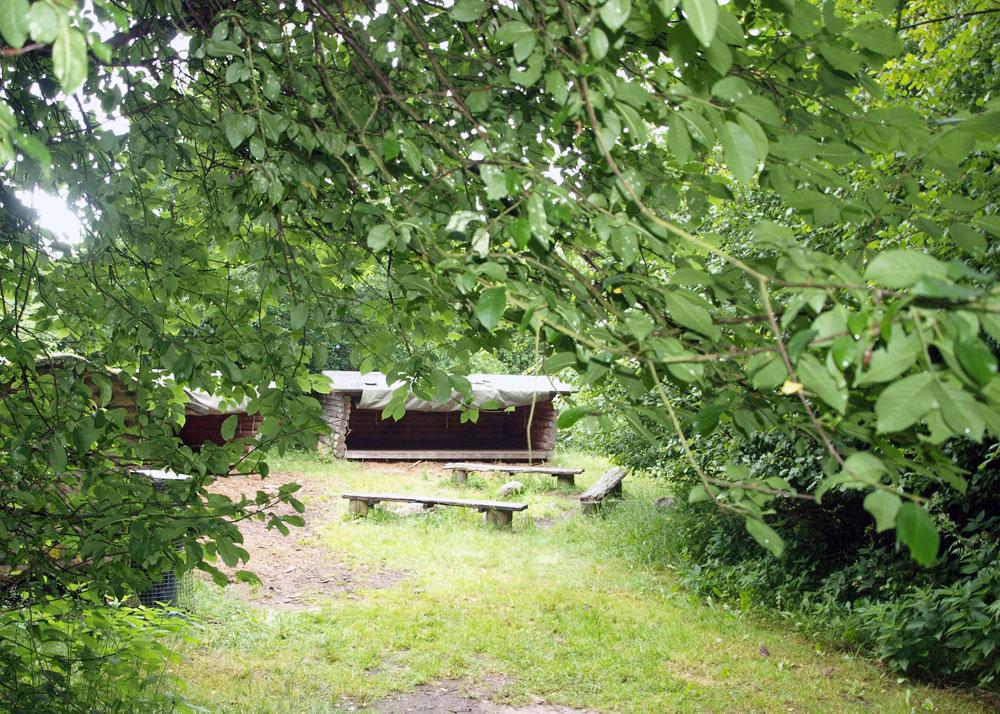 shelters midt i skoven