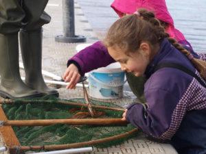 waderstur i lavt vand fang dyr