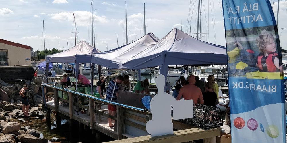 Midt på Bønnerup marina kan du møde vores sommer pop-ud base med akvarier og rørebassin. Du kan låne net og krabbestænger og så selv prøve lykken.