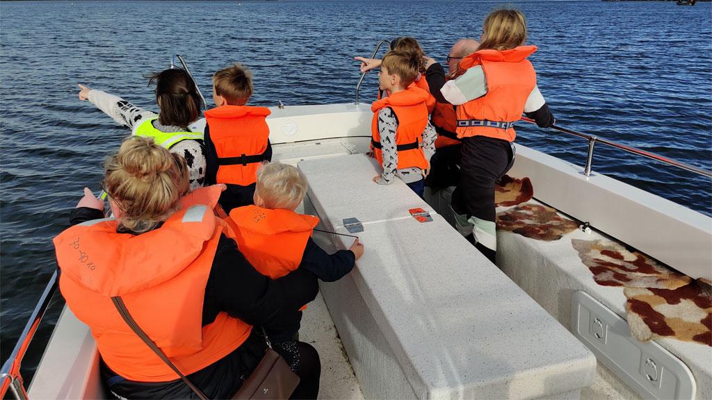 Vi kigger efter sæler