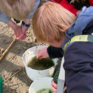drenge der undersøger havlivet i spand