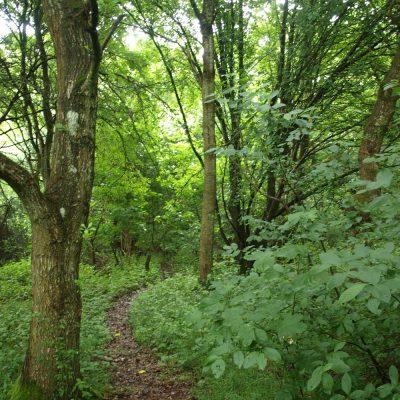 natursti i skoven