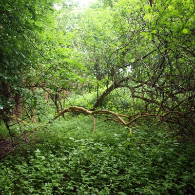 shelter i skoven